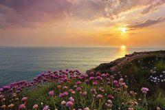 8-901 cikkszámú tapéta.Tájkép,természeti mintás,virágmintás,barna,kék,lila,sárga,zöld,gyengén mosható,papír poszter, fotótapéta