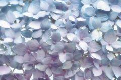 8-961 cikkszámú tapéta.Virágmintás,kék,lila,gyengén mosható,papír poszter, fotótapéta