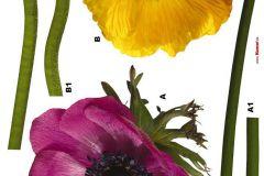 17012 cikkszámú tapéta.Természeti mintás,virágmintás,lila,pink-rózsaszín,sárga,zöld,anyagában öntapadós falmatrica