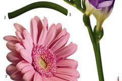 18887 cikkszámú tapéta.Természeti mintás,virágmintás,lila,pink-rózsaszín,zöld,anyagában öntapadós falmatrica