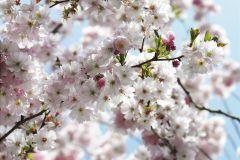 8-507 cikkszámú tapéta.3d hatású,fotórealisztikus,természeti mintás,virágmintás,fehér,kék,pink-rózsaszín,papír poszter, fotótapéta