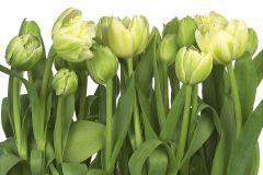 8-900 cikkszámú tapéta.3d hatású,fotórealisztikus,virágmintás,fehér,sárga,zöld,papír poszter, fotótapéta
