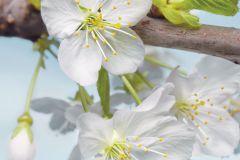XXL2-033 cikkszámú tapéta.Fotórealisztikus,virágmintás,barna,fehér,kék,szürke,zöld,gyengén mosható,vlies poszter, fotótapéta