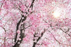 XXL4-046 cikkszámú tapéta.Fa hatású-fa mintás,fotórealisztikus,tájkép,természeti mintás,barna,pink-rózsaszín,sárga,gyengén mosható,vlies poszter, fotótapéta
