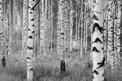 XXL4-023 cikkszámú tapéta.Fotórealisztikus,tájkép,fehér,fekete,szürke,gyengén mosható,vlies poszter, fotótapéta