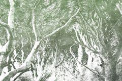 6024B-VD2 cikkszámú tapéta.Absztrakt,fa hatású-fa mintás,különleges motívumos,természeti mintás,szürke,zöld,vlies poszter, fotótapéta