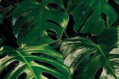 P333-VD1 cikkszámú tapéta.Fotórealisztikus,zöld,vlies poszter, fotótapéta
