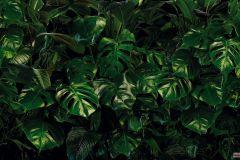 P333-VD4 cikkszámú tapéta.Fotórealisztikus,zöld,vlies poszter, fotótapéta