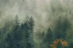 PSH036-VD1 cikkszámú tapéta.Fotórealisztikus,narancs-terrakotta,szürke,zöld,vlies poszter, fotótapéta