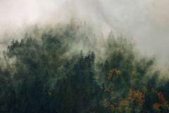PSH036-VD3 cikkszámú tapéta.Fotórealisztikus,narancs-terrakotta,szürke,zöld,vlies poszter, fotótapéta