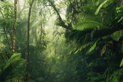 PSH098-VD5 cikkszámú tapéta.Fotórealisztikus,természeti mintás,zöld,vlies poszter, fotótapéta