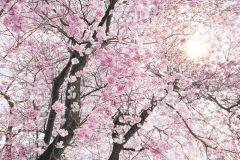 SH083-VD4 cikkszámú tapéta.Természeti mintás,virágmintás,vlies poszter, fotótapéta