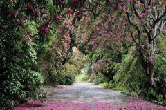 8-985 cikkszámú tapéta.Fotórealisztikus,természeti mintás,virágmintás,barna,pink-rózsaszín,szürke,zöld,papír poszter, fotótapéta