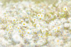 8-994 cikkszámú tapéta.Fotórealisztikus,virágmintás,barna,fehér,sárga,szürke,zöld,papír poszter, fotótapéta