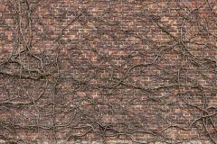 E020201-9 cikkszámú tapéta.Természeti mintás,fa hatású-fa mintás,különleges motívumos,fotórealisztikus,szürke,piros-bordó,barna,bézs-drapp,gyengén mosható,vlies poszter, fotótapéta