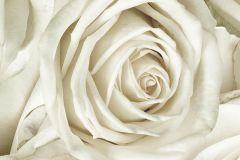 P191501-8 cikkszámú tapéta.3d hatású,absztrakt,fotórealisztikus,retro,természeti mintás,virágmintás,bézs-drapp,fehér,vajszín,gyengén mosható,vlies poszter, fotótapéta