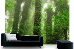 P111701-8 cikkszámú tapéta.Természeti mintás,fa hatású-fa mintás,különleges motívumos,tájkép,fotórealisztikus,fehér,barna,zöld,gyengén mosható,vlies poszter, fotótapéta