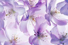 P140501-4 cikkszámú tapéta.Fotórealisztikus,természeti mintás,virágmintás,fehér,lila,gyengén mosható,vlies poszter, fotótapéta