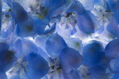 P140502-4 cikkszámú tapéta.3d hatású,fotórealisztikus,természeti mintás,virágmintás,fehér,kék,gyengén mosható,vlies poszter, fotótapéta