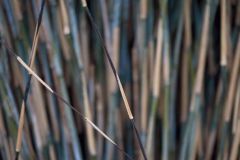 DM318-4 cikkszámú tapéta.Retro,természeti mintás,barna,bézs-drapp,kék,zöld,gyengén mosható,vlies poszter, fotótapéta