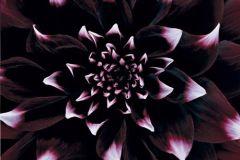DM319-2 cikkszámú tapéta.3d hatású,fotórealisztikus,természeti mintás,fehér,fekete,pink-rózsaszín,piros-bordó,gyengén mosható,vlies poszter, fotótapéta