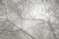 P230202-0 cikkszámú tapéta.Fa hatású-fa mintás,különleges motívumos,rajzolt,retro,természeti mintás,virágmintás,barna,bézs-drapp,szürke,gyengén mosható,vlies poszter, fotótapéta