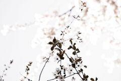 P230801-4 cikkszámú tapéta.Fotórealisztikus,gyerek,különleges motívumos,retro,természeti mintás,virágmintás,bézs-drapp,fehér,fekete,szürke,gyengén mosható,vlies poszter, fotótapéta