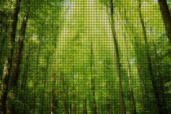 P201501-6 cikkszámú tapéta.3d hatású,fotórealisztikus,különleges motívumos,retro,természeti mintás,barna,bézs-drapp,sárga,szürke,zöld,gyengén mosható,vlies poszter, fotótapéta