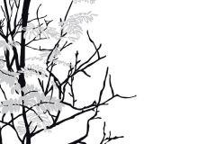 P031802-4 cikkszámú tapéta.Természeti mintás,fa hatású-fa mintás,fehér,szürke,fekete,gyengén mosható,vlies poszter, fotótapéta