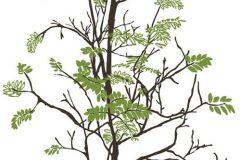P031801-8 cikkszámú tapéta.Fa hatású-fa mintás,különleges motívumos,rajzolt,természeti mintás,fehér,fekete,zöld,gyengén mosható,vlies poszter, fotótapéta