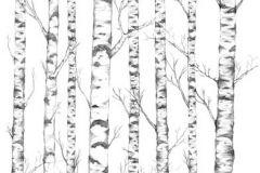 P032401-5 cikkszámú tapéta.Fa hatású-fa mintás,különleges motívumos,rajzolt,természeti mintás,fehér,fekete,szürke,gyengén mosható,vlies poszter, fotótapéta
