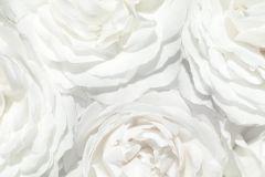 E040602-8 cikkszámú tapéta.Fotórealisztikus,különleges motívumos,virágmintás,fehér,szürke,gyengén mosható,vlies poszter, fotótapéta