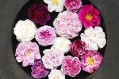 E040604-6 cikkszámú tapéta.Konyha-fürdőszobai,különleges motívumos,virágmintás,fehér,pink-rózsaszín,piros-bordó,sárga,szürke,gyengén mosható,vlies poszter, fotótapéta