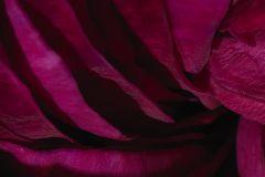 E040606-6 cikkszámú tapéta.3d hatású,fotórealisztikus,különleges motívumos,természeti mintás,virágmintás,fekete,piros-bordó,gyengén mosható,vlies poszter, fotótapéta