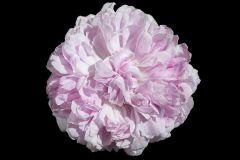 E040607-6 cikkszámú tapéta.3d hatású,különleges motívumos,természeti mintás,virágmintás,fekete,pink-rózsaszín,gyengén mosható,vlies poszter, fotótapéta