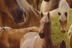 293104 cikkszámú tapéta.állatok,gyerek,barna,bézs-drapp,zöld,gyengén mosható,papír tapéta